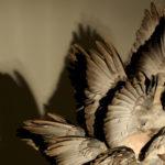 Polly Morgan Void Gallery exhibition photos